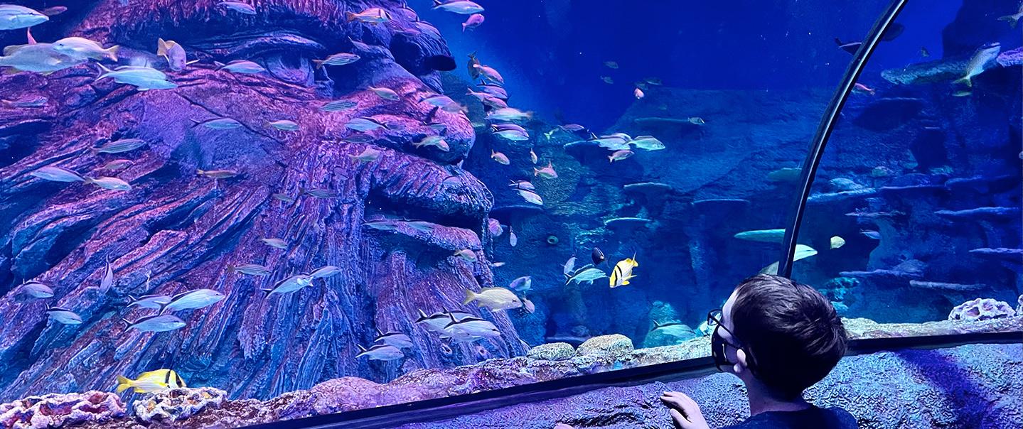SEA LIFE San Antonio Aquarium -